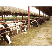 Finca Ganadera 50,000 Tarea Republica Dominicana