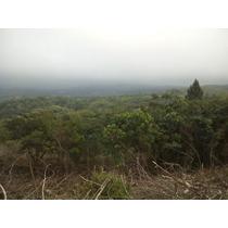 Proyecto Nido De Nubes, Casas De Campos En Las Montaña-