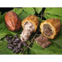 Finca Cacao Sembrada 980 Tarea En Producción