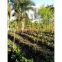Vendo Terreno En Haina Nigua